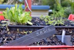 Acupuncturist Maurizio Bontempi holds gardening workshops in Ashgrove